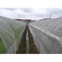 China Anti Insect Net 50x35mesh,growing and agriculture using,greenhouse using  50-140g/m2  0.5m-6m width   black,white wholesale