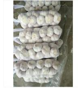 China Fresh Garlic And Ginger Fresh Garlic Packaging Single Clove Garlic Braids wholesale