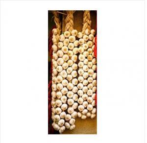 China New Crop Garlic Braid wholesale