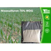 China Nicosulfuron 75% WDG Selective Herbicide For Maize Annual Grass Control wholesale