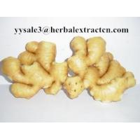 Wholesale Ginger Extract,Black ginger Extract, Gingerol 5% 6% HPLC, 10:1, CAS No.: 1391-73-7, blood stimulant and cleansing,nature from china suppliers