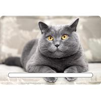 China Custom 7x11cm Lovely Cats 3d Fridge Magnets With Notepad For House Refrigerator wholesale