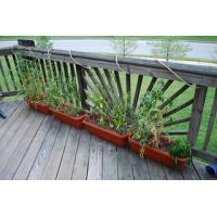 China Outdoor Decking Bamboo Flooring wholesale