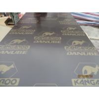 China KANGAROO BRAND FILM FACED PLYWOOD, POPLAR CORE, WBP MELAMINE GLUE,Formwork concrete film faced shuttering marine plywood on sale