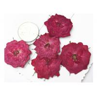 China True Rose Flower Dried Pressed Flowers For Pendant Necklace Jewelry Ornaments Material wholesale