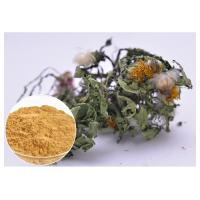 China Flavones Dandelion Root Extract Powder For Diuretic Whole Herb Extraction wholesale