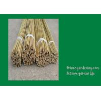 China 6 Foot Strong Long Bamboo Garden Stakes Nature Straight 6 - 8mm wholesale