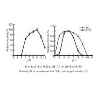 China Yeast Kex2 Protease Endoproteolytic Processing Of Recombinant Proalbumin Variants wholesale