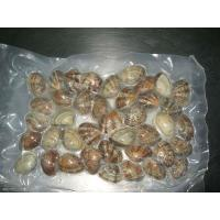 China seafood and frozen vacuum clam for good quality wholesale