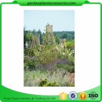 China Straight Garden Bamboo Stakes For Thick Bamboo Fencing 40 X 150cm wholesale