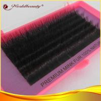 China Siberian C Curl Mink Fur Eyelashes Extensions Natural Looking wholesale