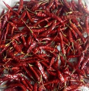 China CHILI, hot chili, indian chili, teja , s17,s8, pungency 75000-100000SHU on sale