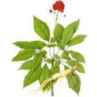 Wholesale Panax Ginseng P.E., Ginsenosides 80%UV, Ginseng stem leaf Extract, natural skin care ingredients, SHaanxi Yongyuan Bio from china suppliers