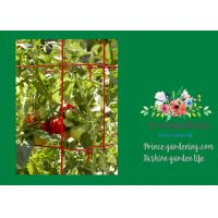 China Powder Coated Steel Support For Tomato Plants wholesale