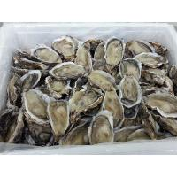 China Frozen Oyster Seafood Frozen Half Shell or full shell wholesale