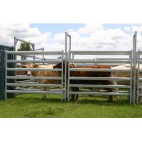 China Used Cattle Yards For Sale Cattle Yard Fence Heavy Duty 6 Oval 1.6mm thick 1.8Mx2.1M wholesale
