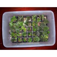 China propagation tray wholesale