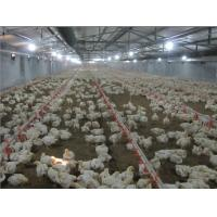 Broiler Automatic Feeding System for Poultry Farm Equipment