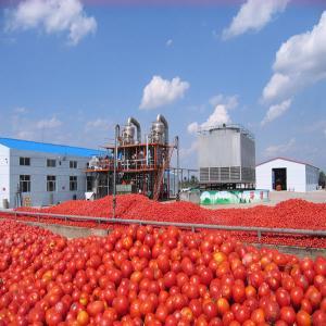 China popular tin can tomato ketchup on sale