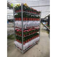 China Plant  Dutch Flower Trolley CC Plywood Garden Tool Cart 400KG Load Capacity wholesale