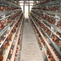 Chicken Cage For Sale , Battery Cages Laying Hens,poultry
