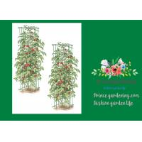 "China Heavy Duty Metal Square Tomato Cages With 8"" Square Openings wholesale"
