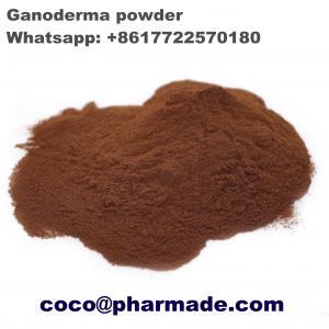 China Safety Pharmaceutical Raw Material , Natural Ganoderma Lucidum Polysaccharides Steroid Raw Powder wholesale