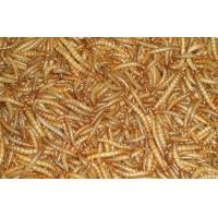 Bird fish food mealworms of drygarlic ginger com for Mealworms for fishing