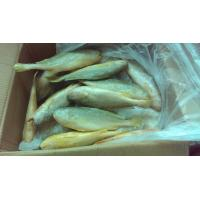 China Good price Fresh Sea Frozen High Quality W/R Frozen Yellow Croaker 200-300g 300-400g for sale wholesale