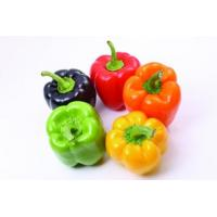 China Capsicum annuum Extract, Cayenne fruit extract, 10:1 TLC, Chinese manufacturer, Shaanxi Yongyuan Bio on sale