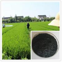 China best plant food for all plants and tree:seaweed extract fertilizer flake on sale