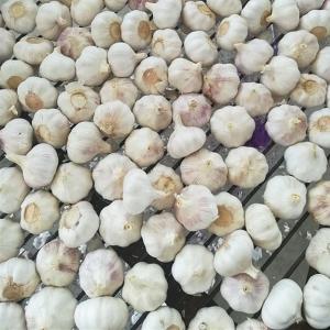 China Fresh Chinese Normal White Garlic wholesale