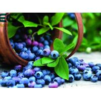China Blueberry powder; Oraganic Food Ingredients; Beauty effect, prevent cancer; antioxidant; Freeze- Dried; eyes care wholesale