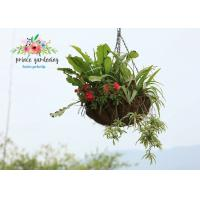 China Classic Hanging Basket Flowers Gardening Decorate For Indoor / Outdoor wholesale