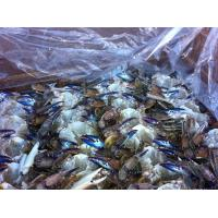 China IQF wholesale seafood frozen crab blue crab from China wholesale