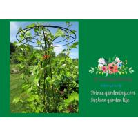 China Flower Supports Plant Stakes , Tall Plant Support For Climbing Plants wholesale