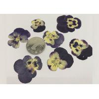 China Garden Pansy Small Dried Flowers 2.5CM Purple Color For Wall Painting Raw Materials wholesale