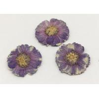 China Beauty Small Dried Flowers Diameter 1.5CM Color Optional For Necklace Ornament wholesale
