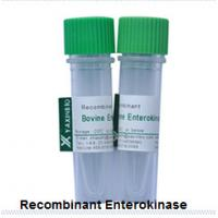 China Recombinant Enterokinase  E.coli Recombinant Enterokinase Supplier wholesale