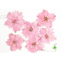 Quality Eternal Floral Dried Pressed Flowers Larkspur Diameter 3CM For Christmas Decorations for sale
