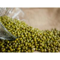China Green Vigna Beans Green mung beans of China Origin for good quality wholesale