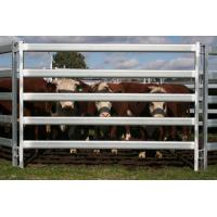 China Used Cattle Yards For Sale Farm Fencing Direct Portable Cattle Panels and Accessories wholesale