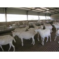 Wholesale H Beams Poultry Farm Structure Galvanized Water Gutter Drainage System from china suppliers