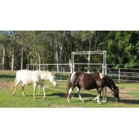 China 20 Panel Horse Yard Panels For Sale Inc Gate, Round Cattle Fences, Corral 14m Diameter wholesale