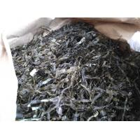China Chinese seafood of dried kelp,dry kelp seaweed for good quality wholesale