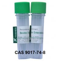 China Recombinant Enterokinase Enzyme and CAS 9017-74-8 Enzyme Enterokinase wholesale