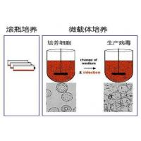 China Expressed with E.coli , Recombinant Trypsin Inhibitor Aprotinin Forms Stable Complexe wholesale