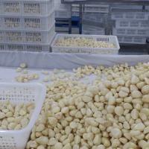 China Frozen Peeled Garlic Clove wholesale