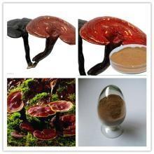 Reishi Mushroom Extract, Chinese manufacture supply, Reishi Mushroom Polysaccharides 10%, Shaan xi Yongyuan Bio-Tech