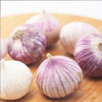 China Purple Garlic for sale ready to export from China season 2019 wholesale